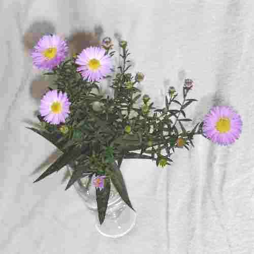 michaelmas daisies in a beer glass
