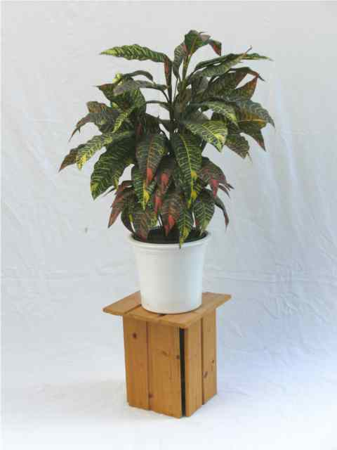 plant stand 8